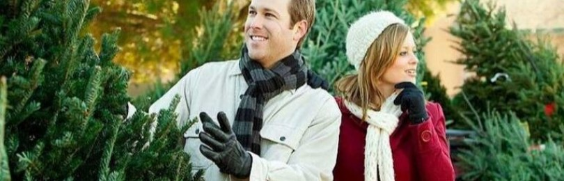 Подробные рекомендации по выбору новогодней елки